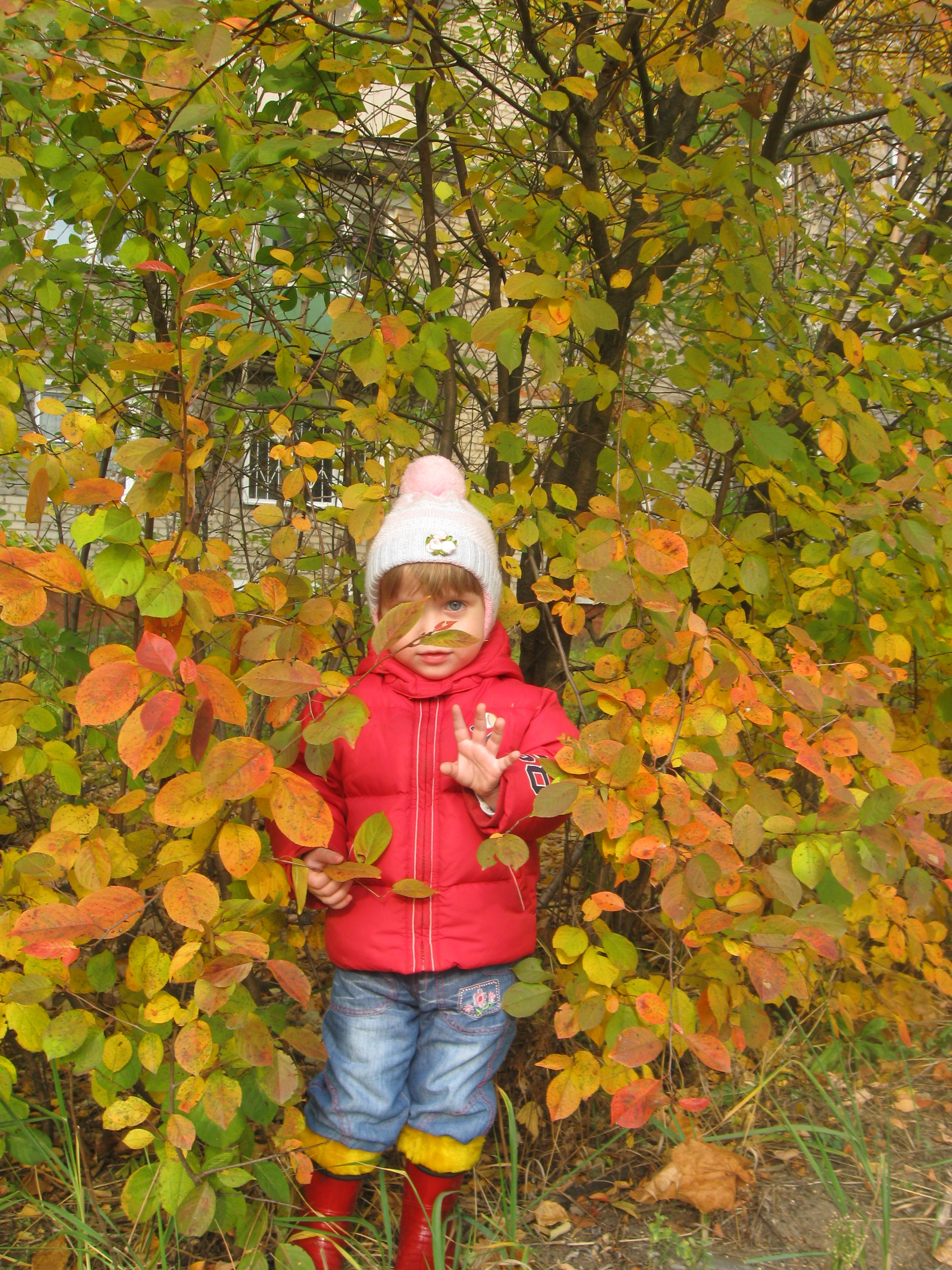 Hide and seek in the leaves
