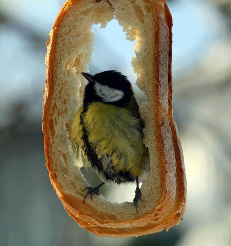 bread bird feeder